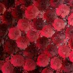 Фотозона из бумажных цветов от студии «Пати-Декор»
